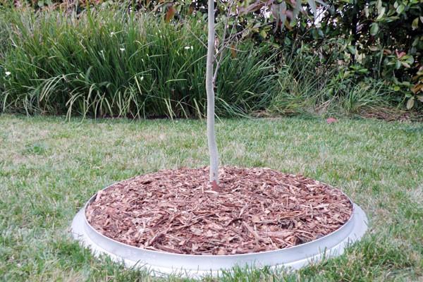 Tree Ring Mulch Mowing